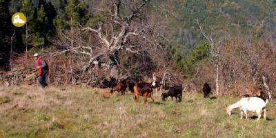 Portugal - Schist Village to Villages, 6 Days